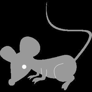 猫部屋・ネズミ部屋のブーム到来?