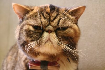 猫のニオイ イメージ
