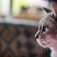 猫屋敷のお片付けが多い