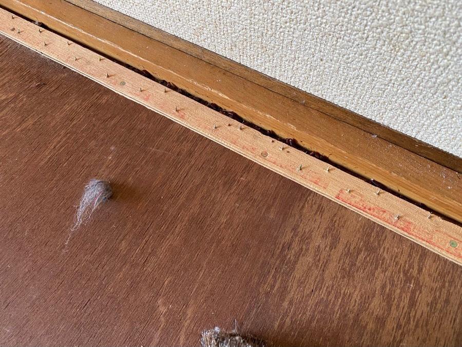木材の隙間から見えるハエのサナギ